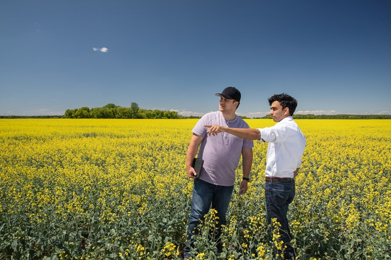 Farmer And Agronomist In Field Of Oilseed Rape. Discussing Farm Management Software
