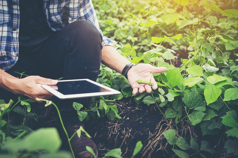 Man In Field Using Farm Management Software On Ipad